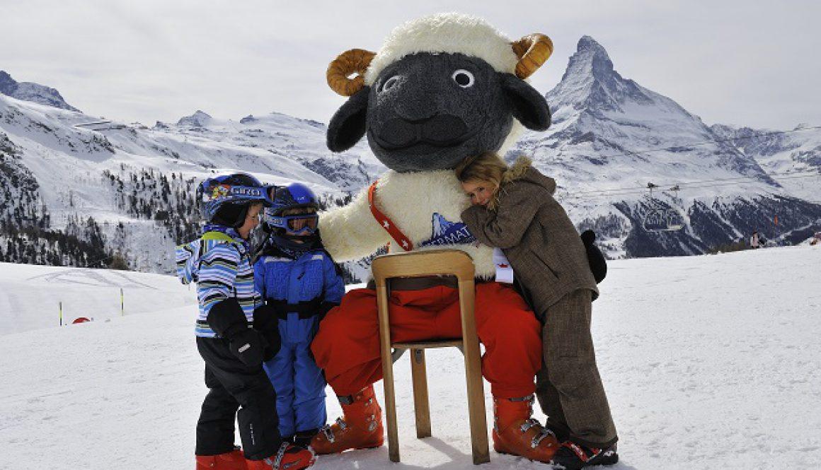 Wolli the sheep CR Michael Portman ZERMATT (1)
