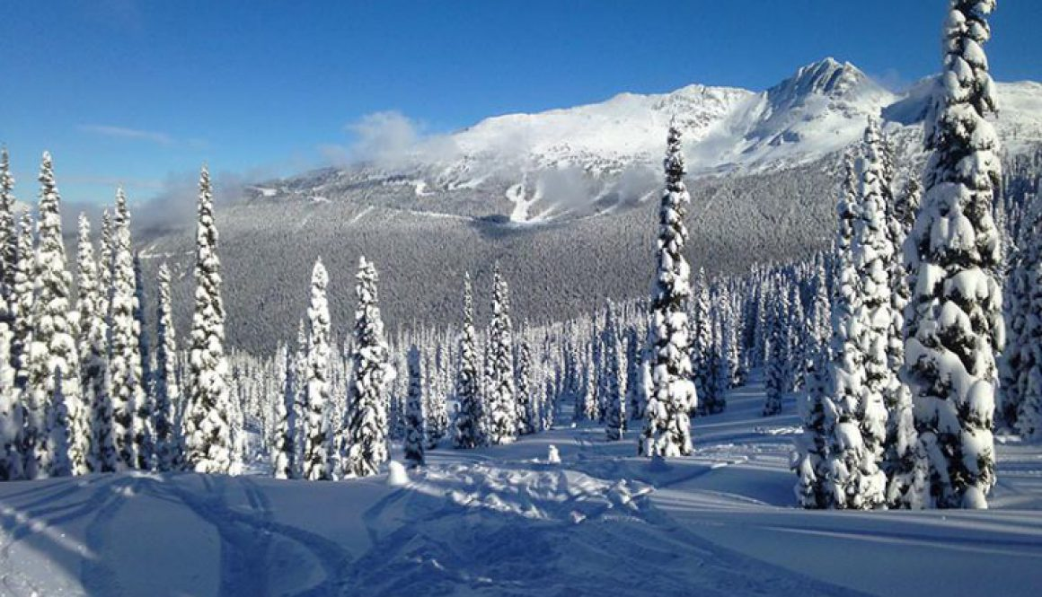 Tall trees covered in snow on a mountainside in Whistler Blackcomb